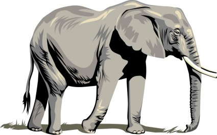 Elephant clip art african elephant. Image of indian clipart
