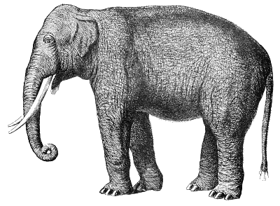 Free clipart page of. Elephant clip art african elephant clipart black and white library