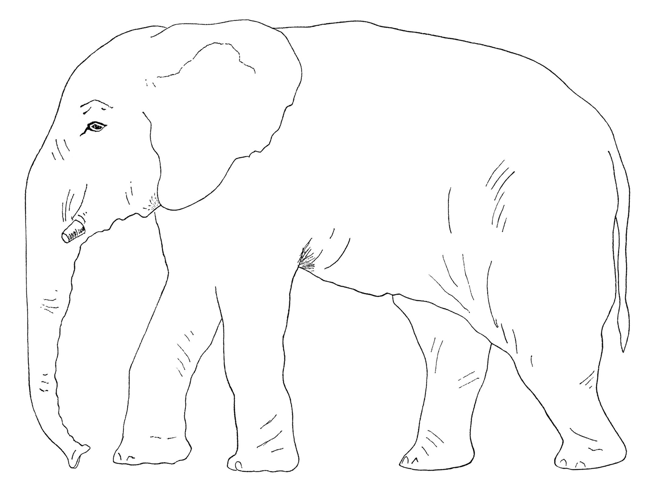 Elephant clip art black and white. Clipart old book page