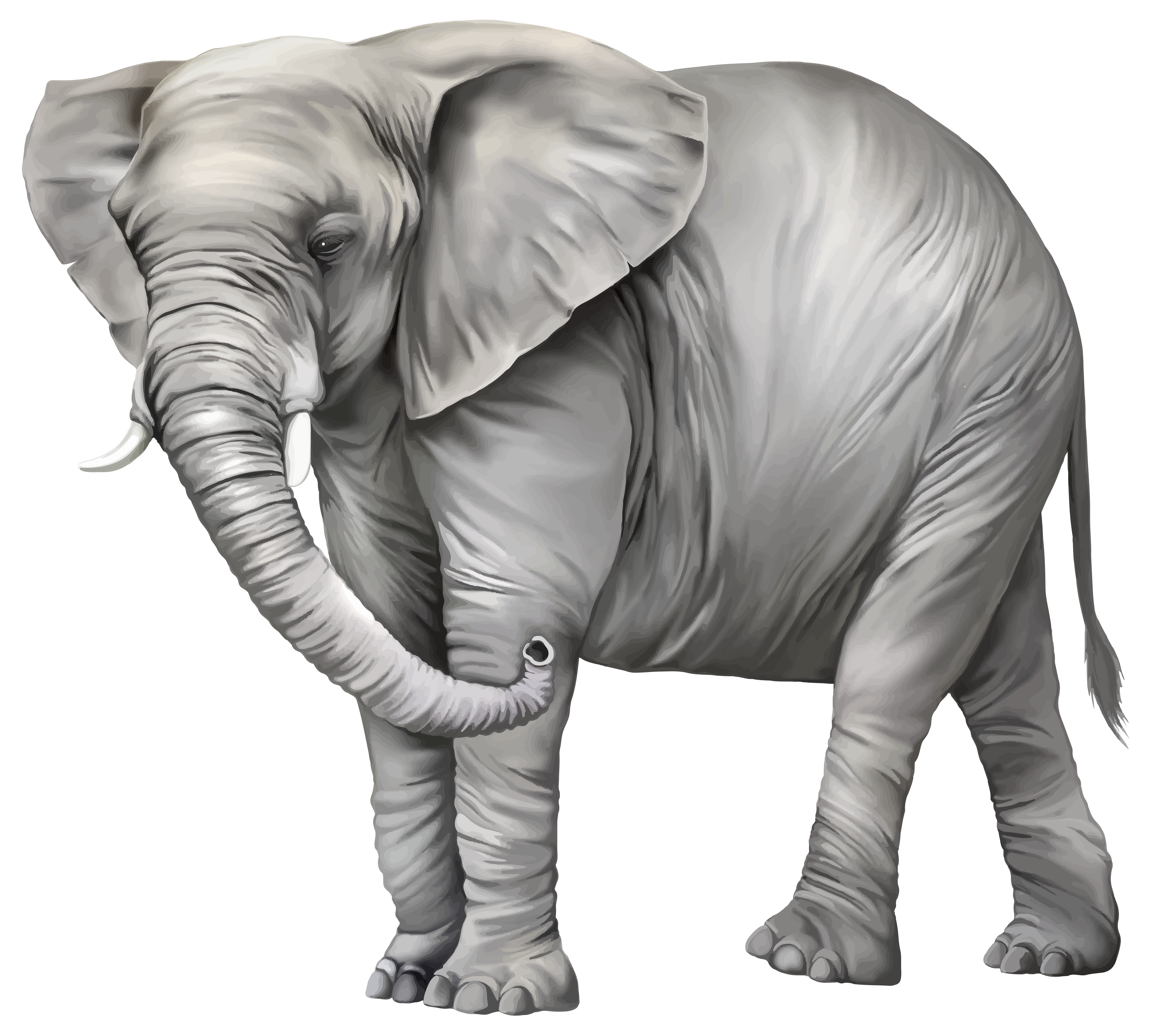 Png clipart best web. Elephant clip art realistic svg black and white library