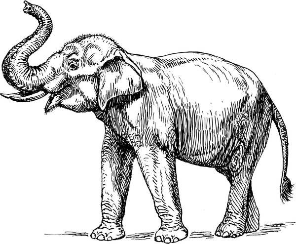 Indian free vector in. Elephant clip art realistic jpg