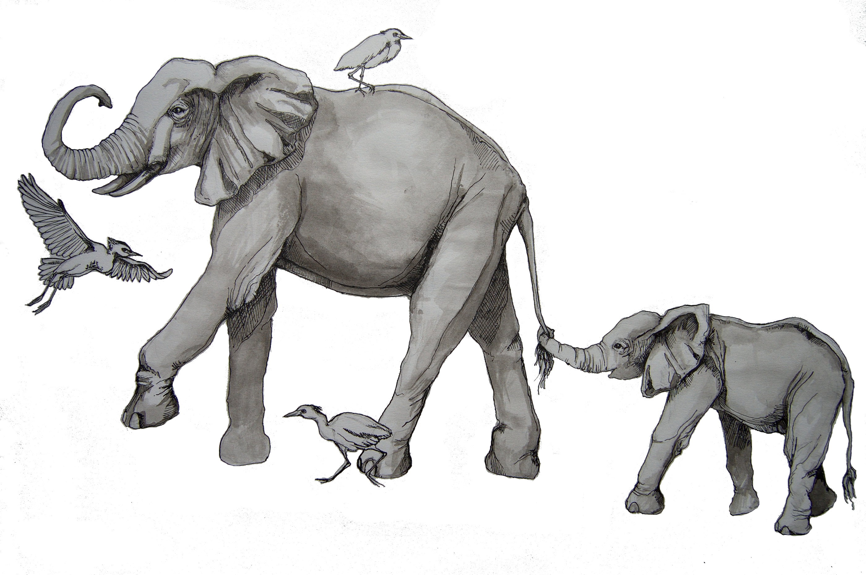 Drawing free download on. Elephant clip art realistic banner black and white stock