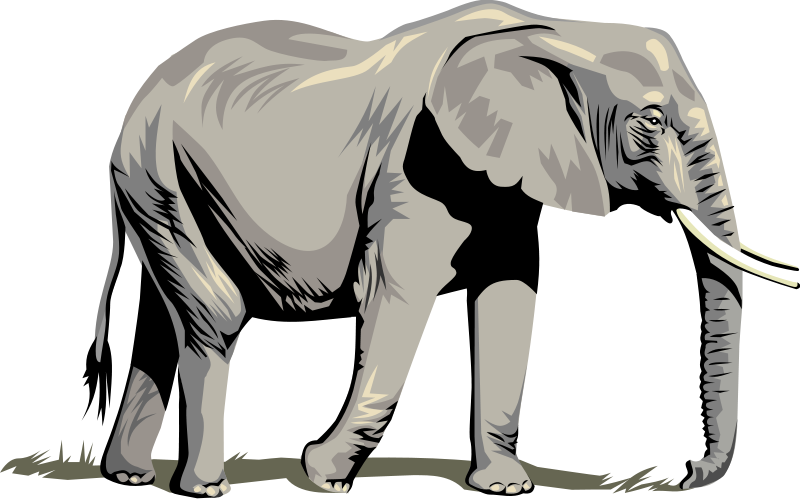 drawing elephants full body
