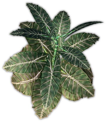 elephant ear plant png