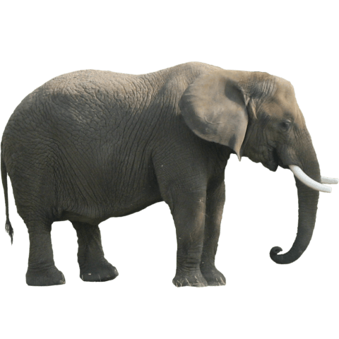 Elephant png images. Free toppng transparent