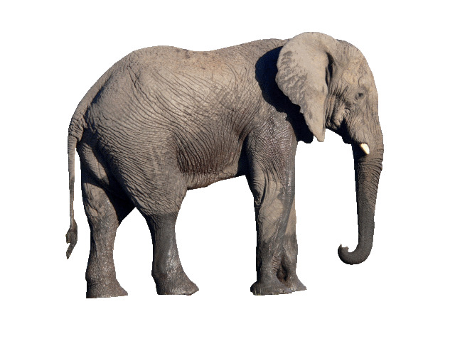 Elephant png images.