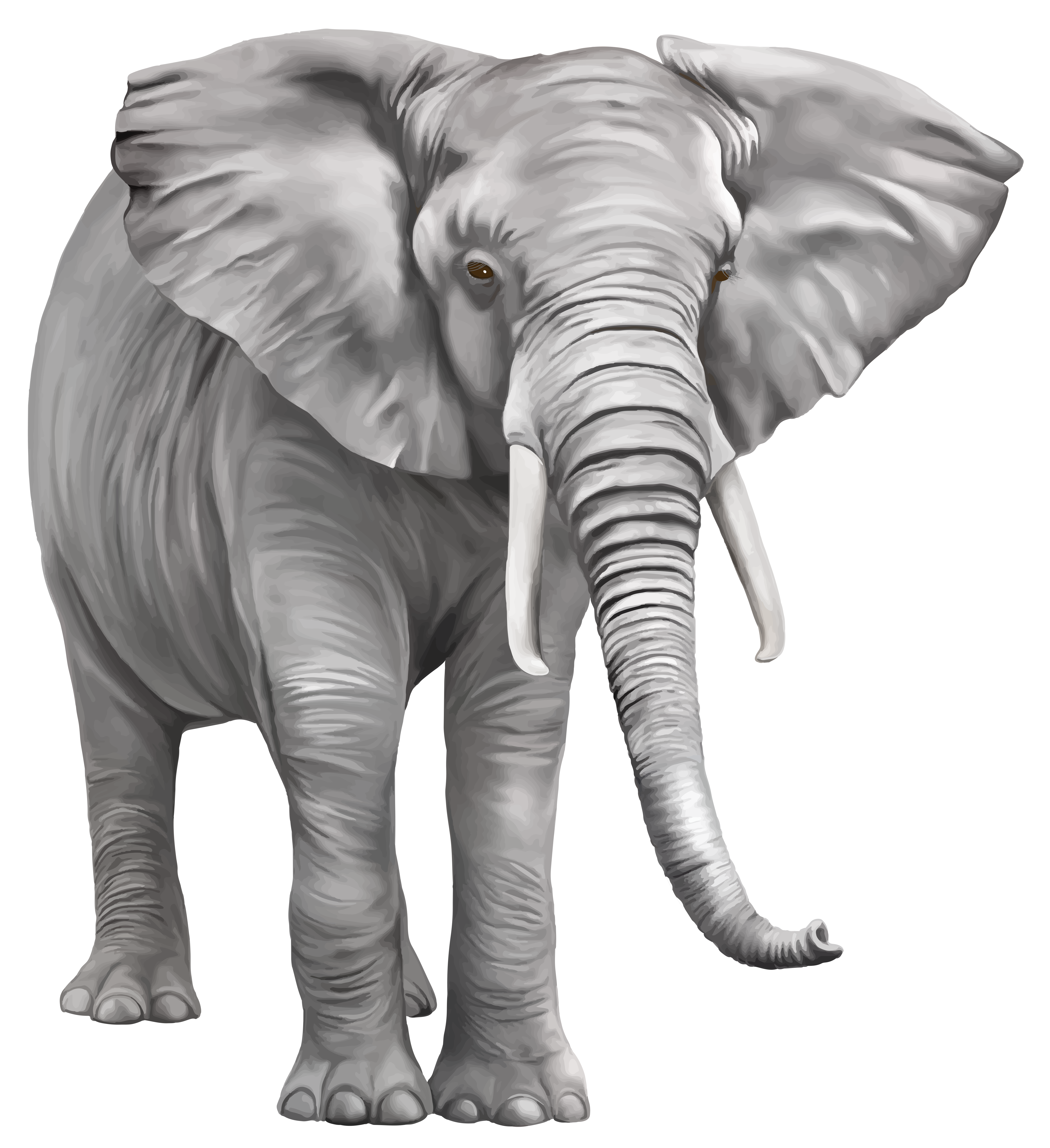 Elephants clipart name. Elephant large png best