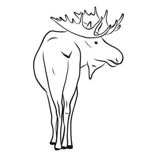 Drawing Raccoon Moose Transparent Clipart Free Download