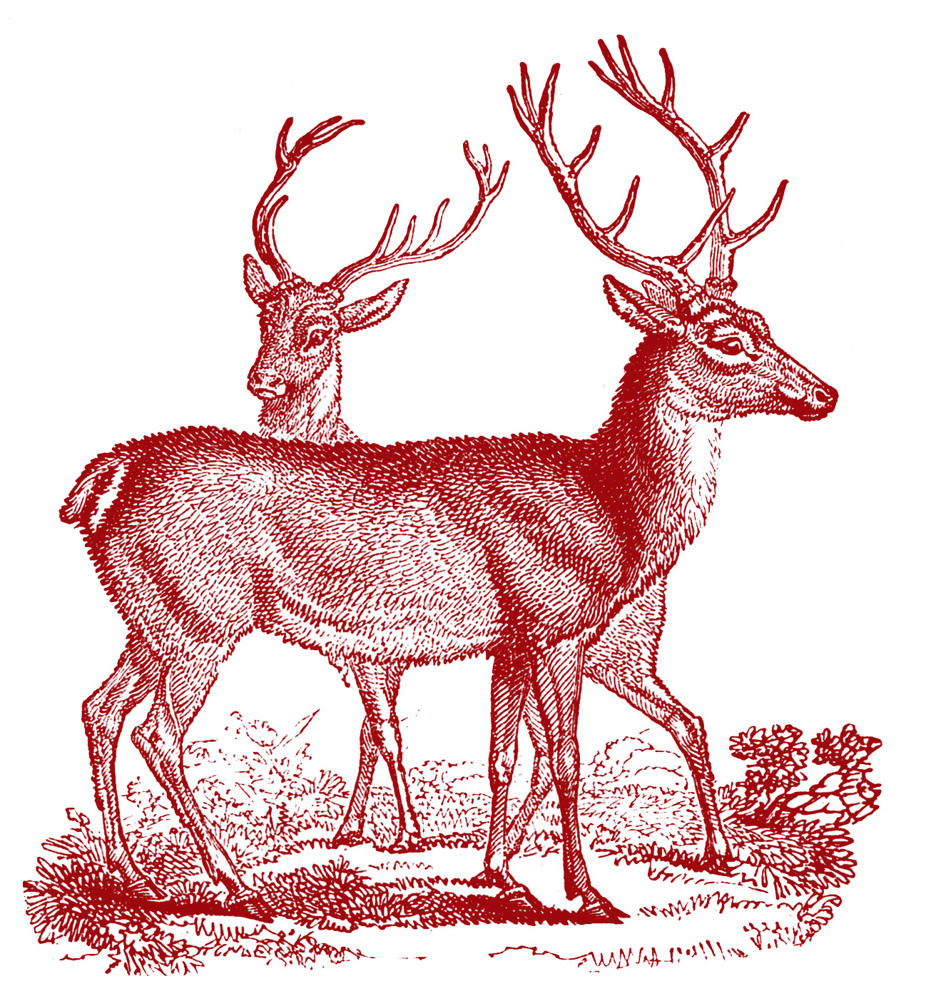 elk clipart mother deer