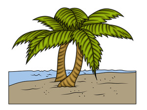 Elongated coconut. Palm trees at island