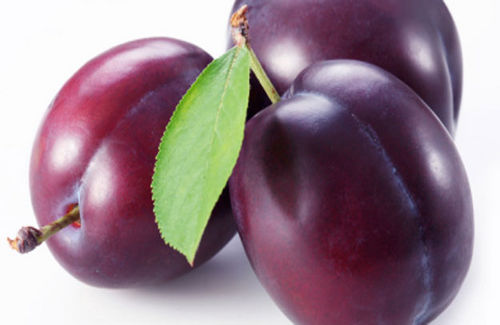 Elongated plum. Plant information and clipart