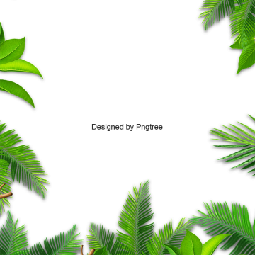 Emerald vector white background. Leaves palm leaf jungle