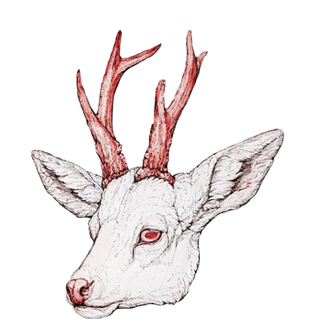 Raindeer drawing eye. Deer eyes at getdrawings