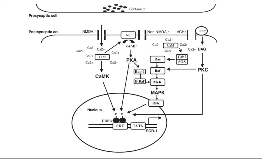 Schematic of signal transduction. Pathway drawing clip black and white
