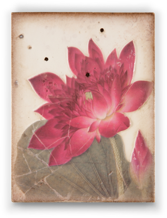 Enlightenment drawing bloomed flower. Ancient bloom through the