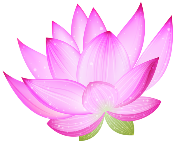 Enlightenment drawing water flower. Pink lotus png by