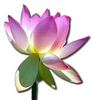 Enlightenment drawing water flower. Lotus sutra the search