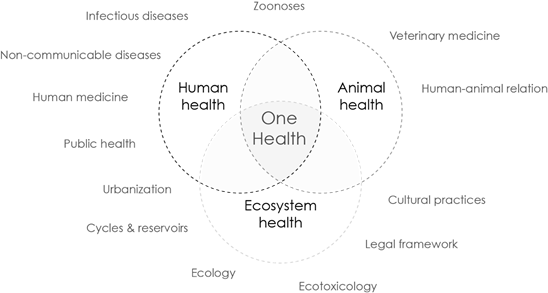 Environment vector ecosystem. One health at the