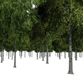 Environment vector forest. Free images photos illustrations