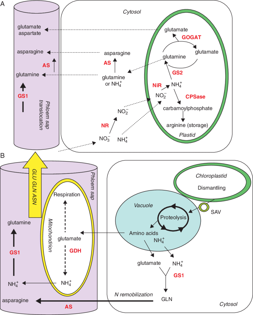 Enzyme drawing key. Schematic presentation of enzymes
