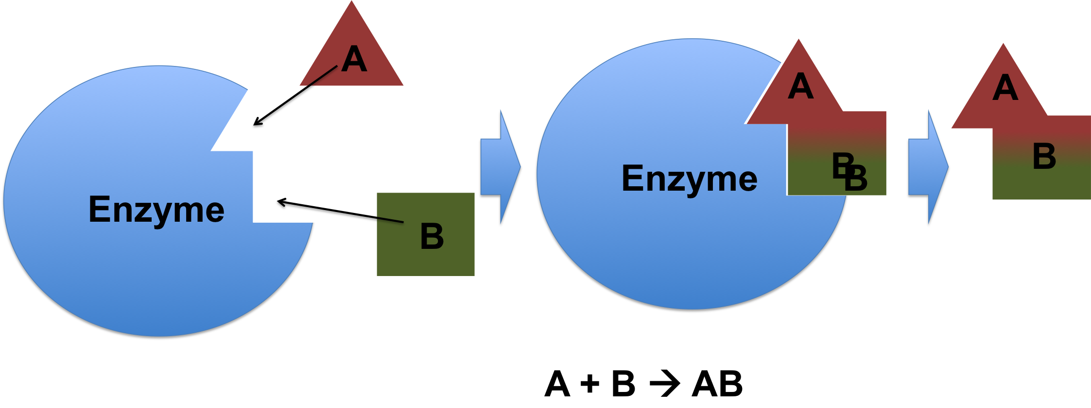 Enzyme drawing anabolic. Catalysis downhousesoftware an processing
