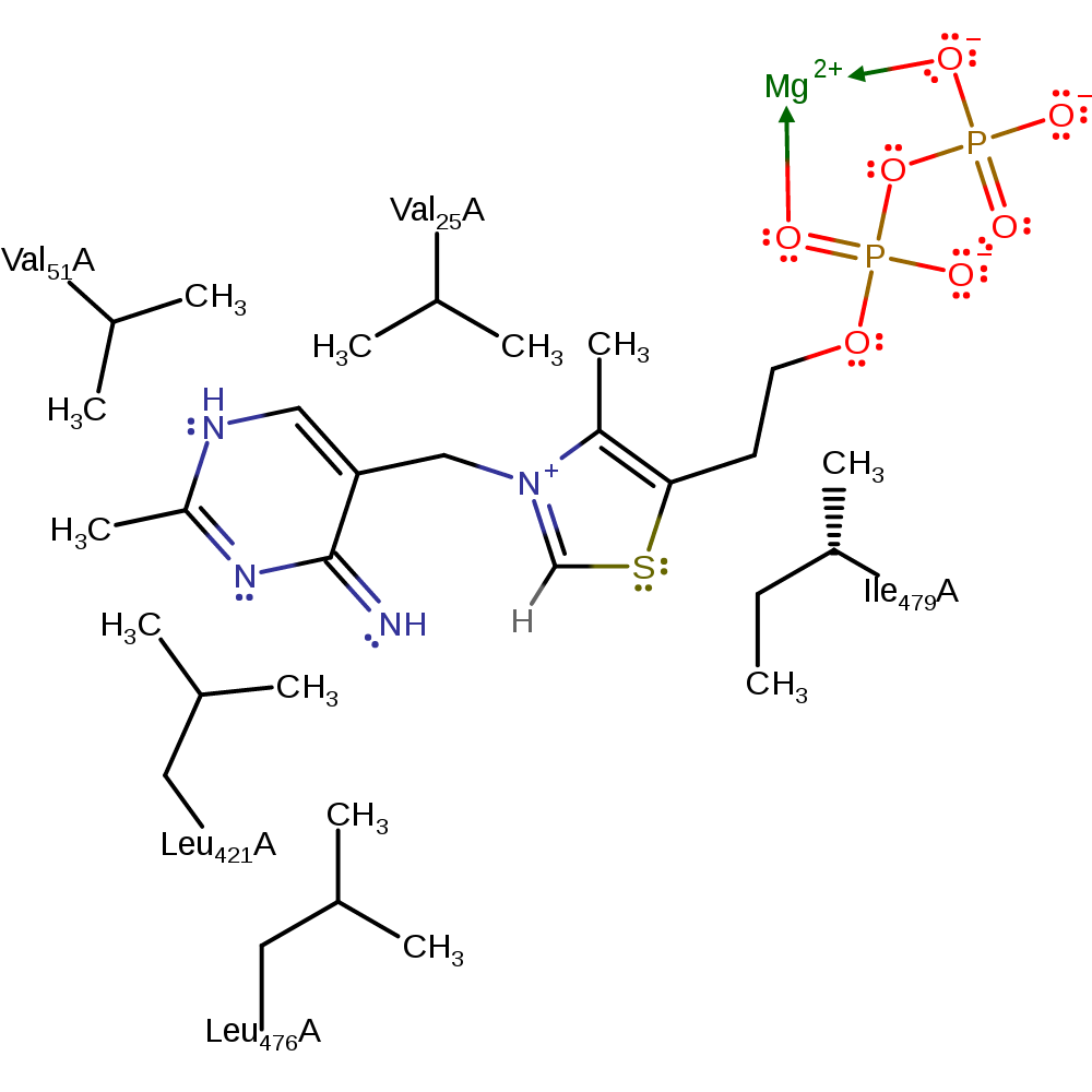 Enzyme drawing active. M csa mechanism and