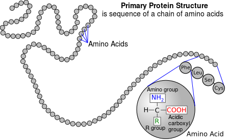 Enzyme drawing protein. Structure and function wikiversity