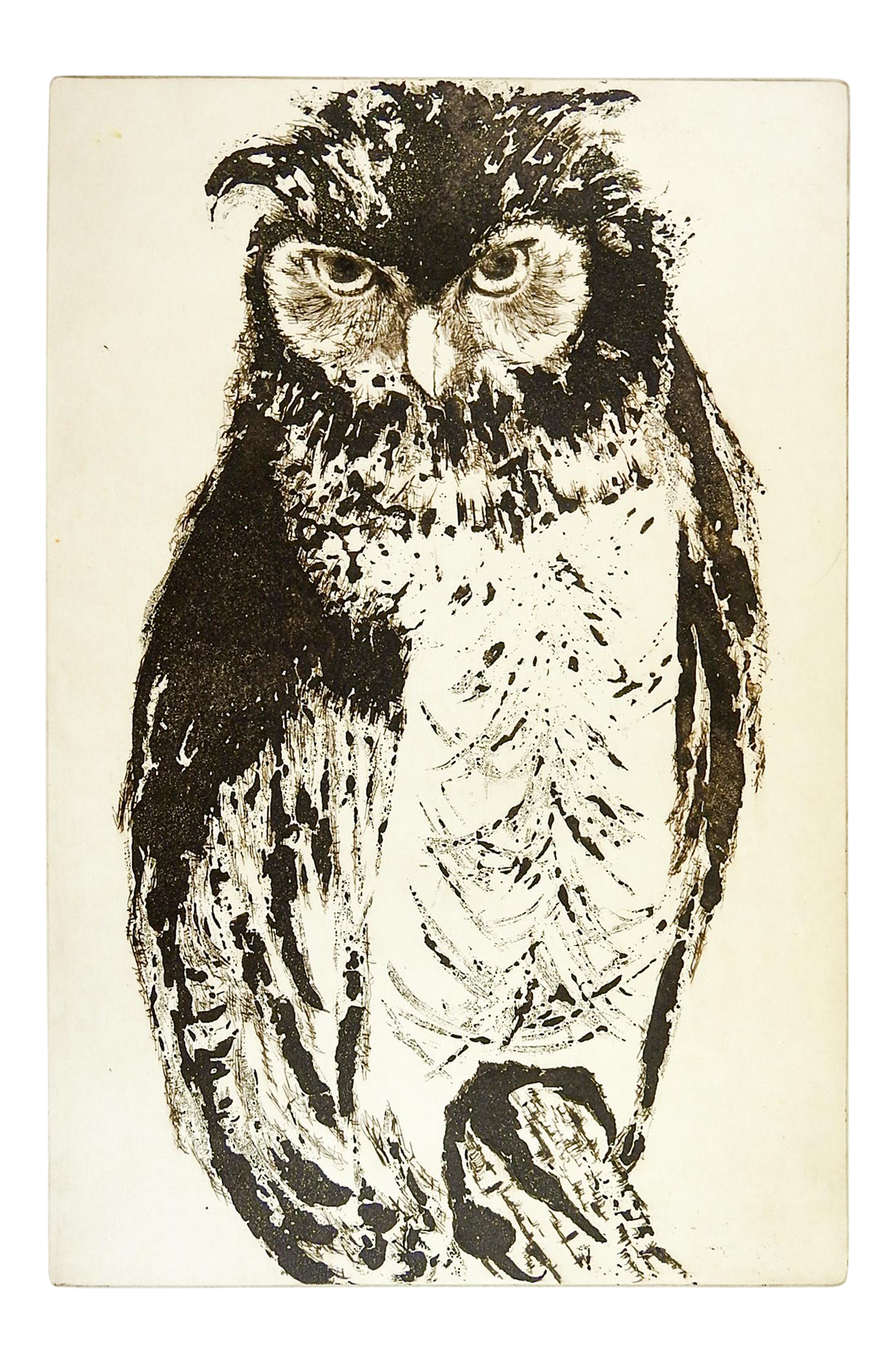 Owl by clara montgomery. Etching drawing pen and ink clipart transparent