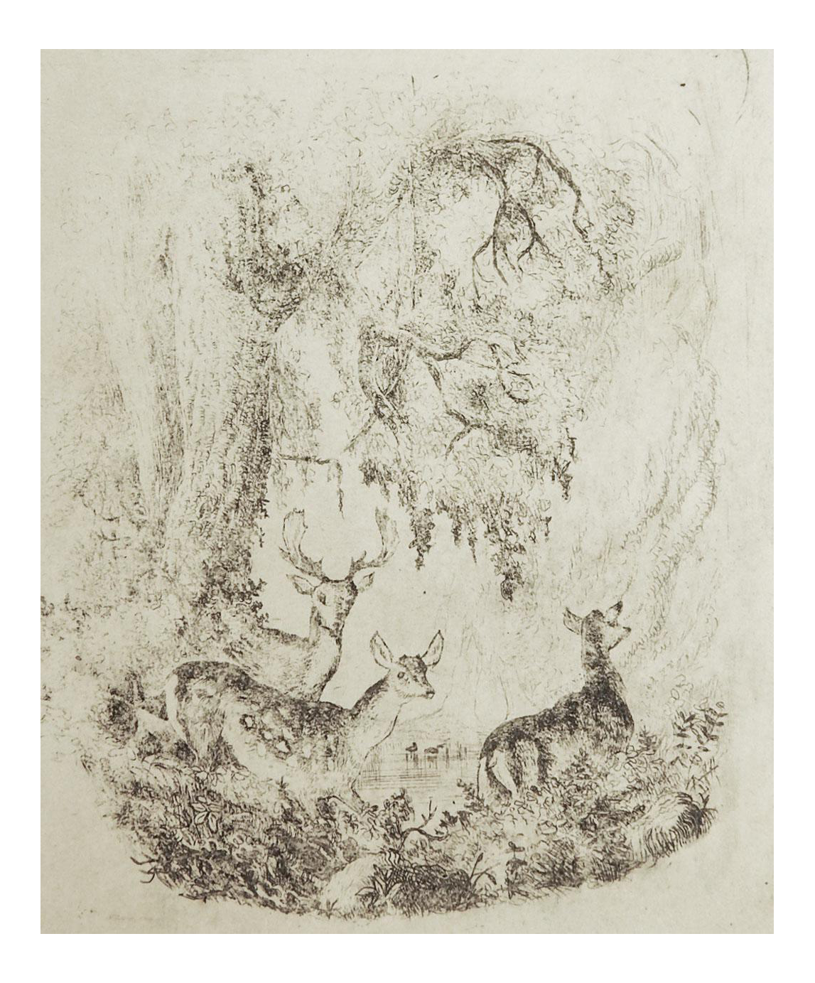 Tiny deer in forest. Etching drawing pen and ink clip art royalty free
