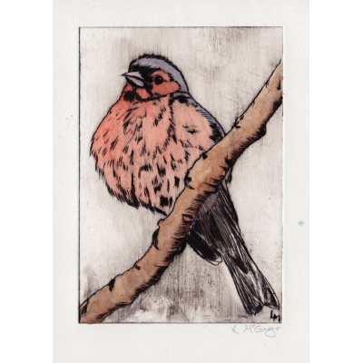 Etching drawing bird. Chaffinch watercoloured drypoint print