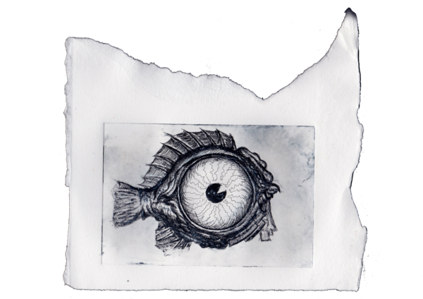 Etching drawing eye. Sold fish archive of