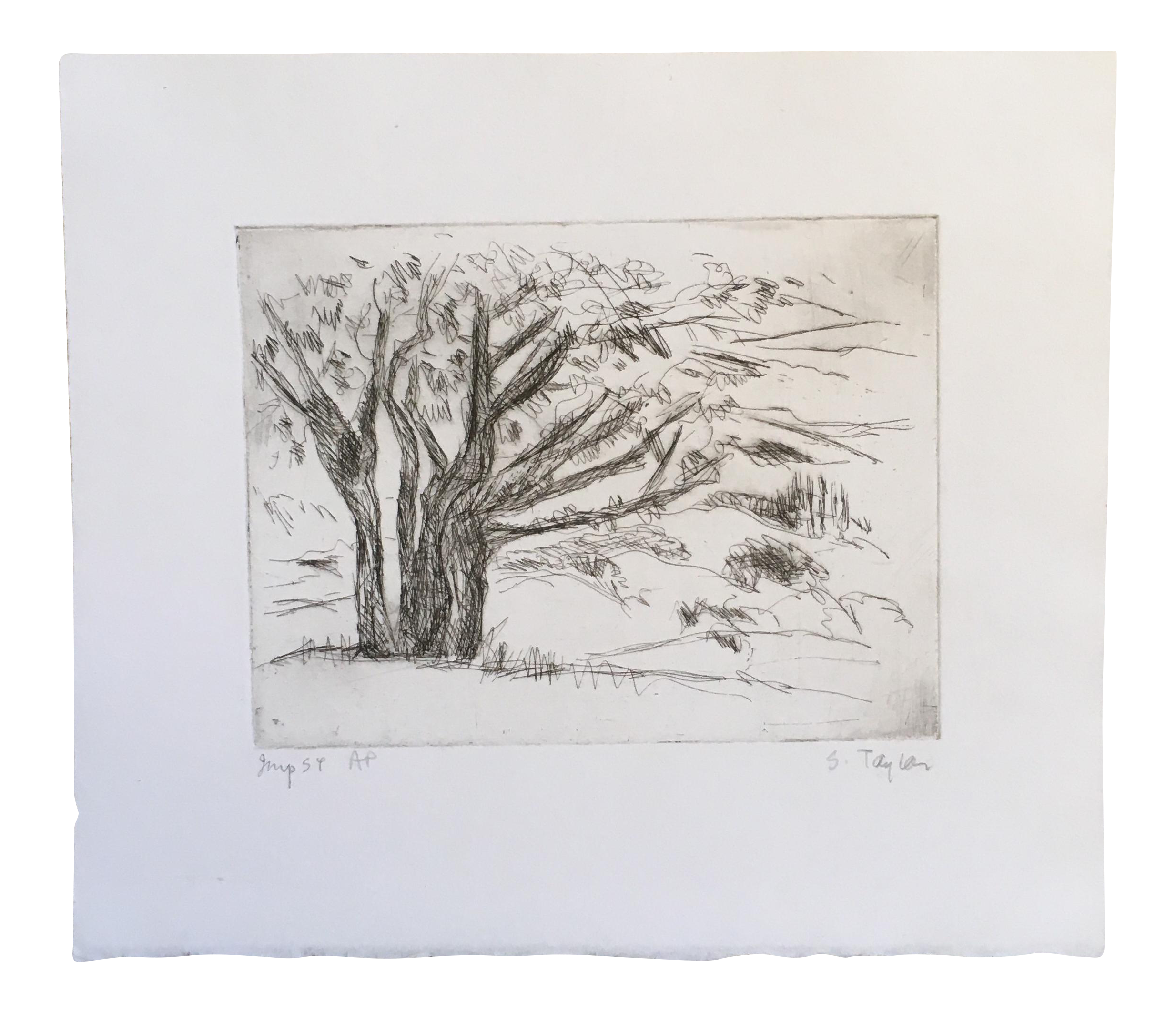 Etching drawing tree. Shirley r taylor chairish