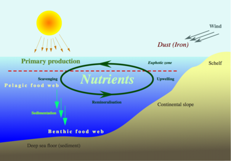 Ecology biogeochemical cycles wikibooks. Annotated drawing carbon cycle clip download
