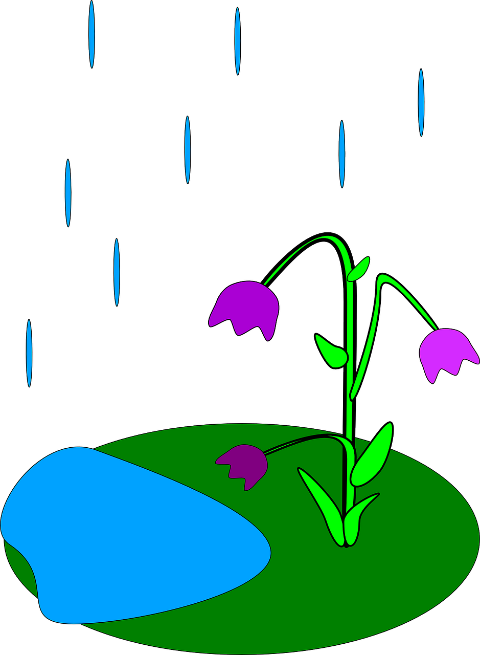 Evaporation drawing kid. How is rain formed