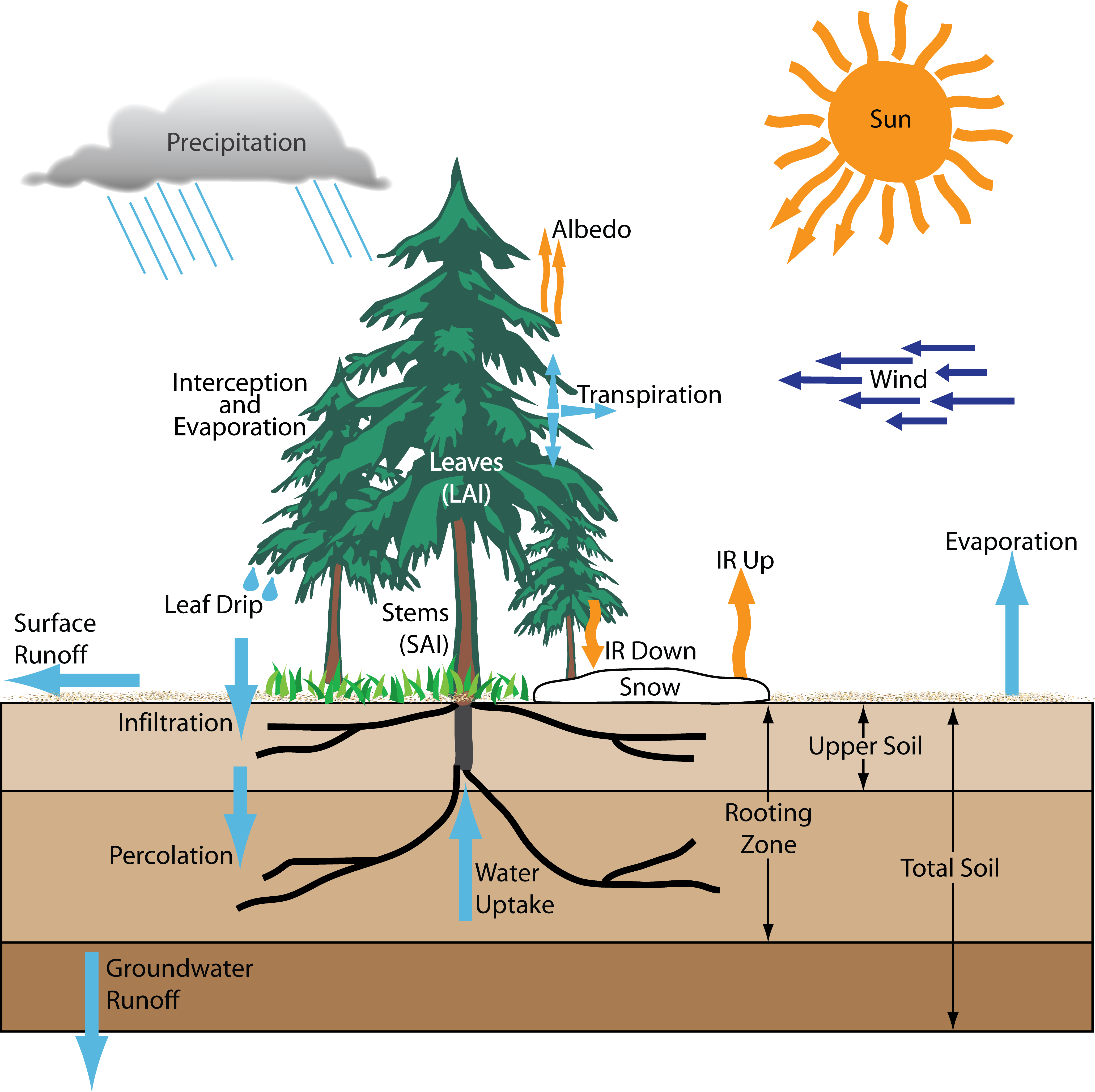 Evaporation drawing plant. Tree transpiration diagram search