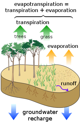 Evaporation drawing plant. Evapotranspiration wikivisually water cycle