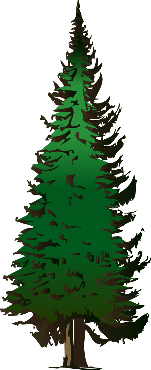 pinetree vector redwood tree