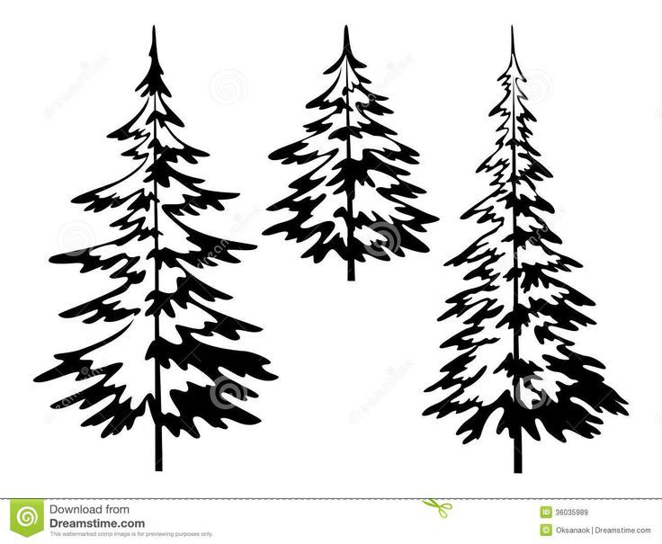 Evergreen clipart balsam fir. Image result for tree