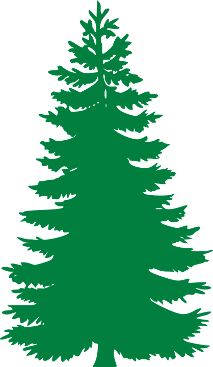 pinetree vector evergreen tree