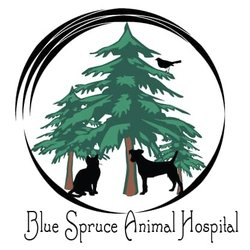 Evergreen clipart blue spruce. Animal hospital get quote