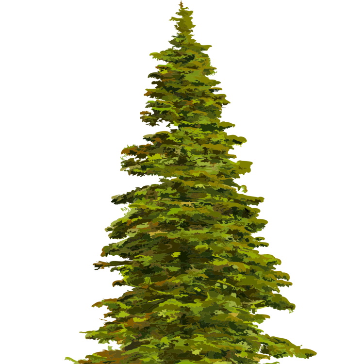 Evergreen clipart blue spruce. Fir tree norway pine