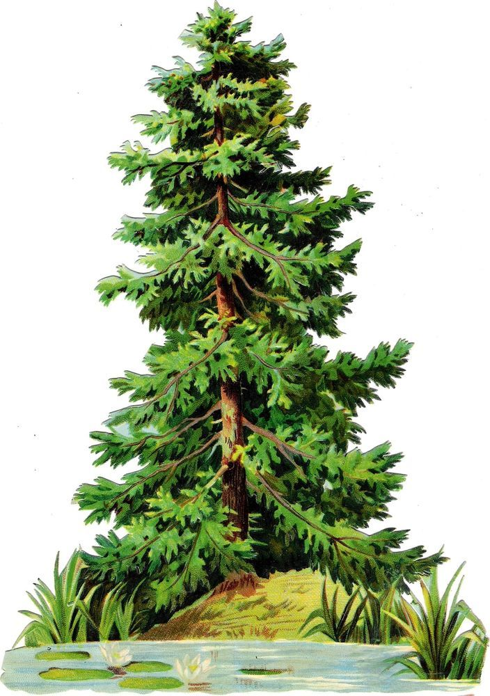 Evergreen clipart deodar tree. Oblaten glanzbild scrap die