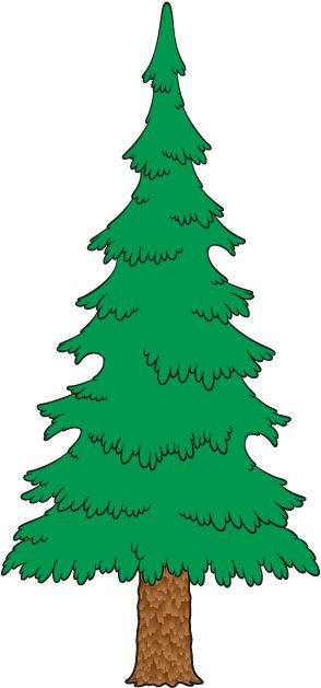 Evergreen clipart deodar tree. Best nature images