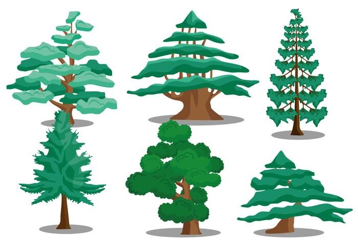 Evergreen clipart deodar tree. Cedar drawing at getdrawings