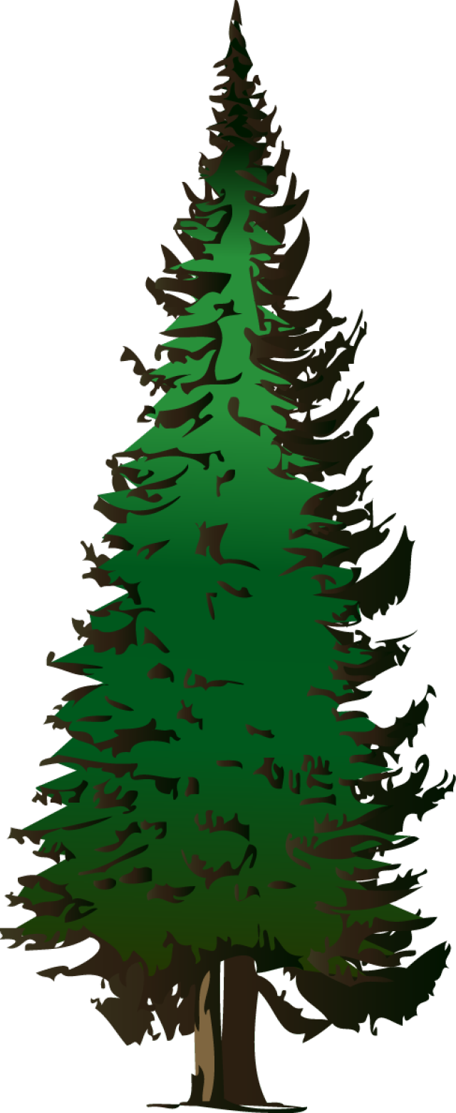 Evergreen clipart evergreen branch. Web design development pinterest