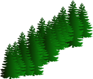 Evergreen clipart fir tree. Cluster clip art at