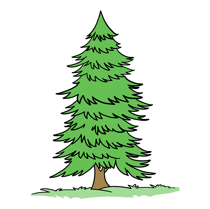 Evergreen clipart pine sprig. How to draw a