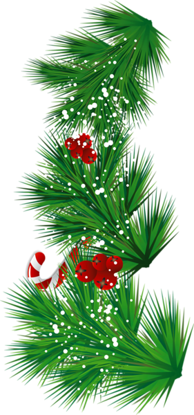 Evergreen clipart pine sprig. Mistletoe for free download