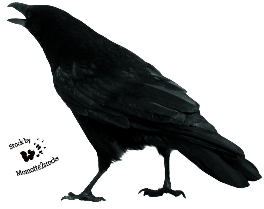 Stock images png. Crow transparent all free