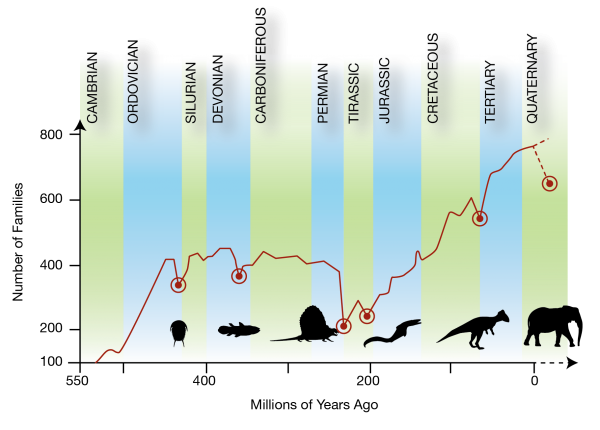 Evolution transparent biodiversity. And figure pattern of